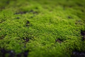 moss-stone